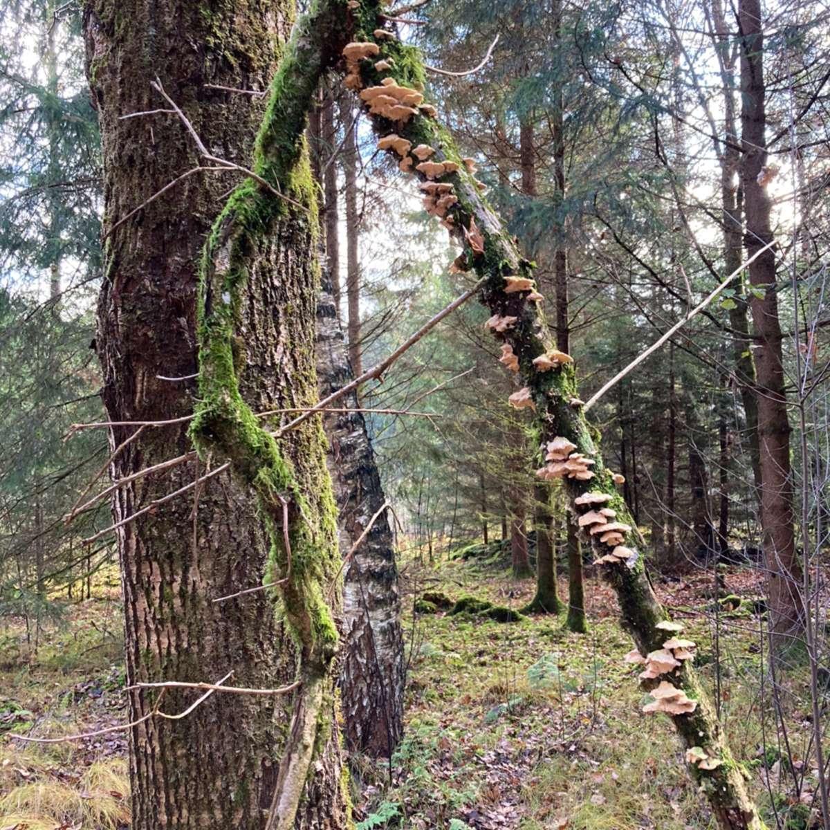 Waldbaden Shinrin Yoku Auszeit in der Natur