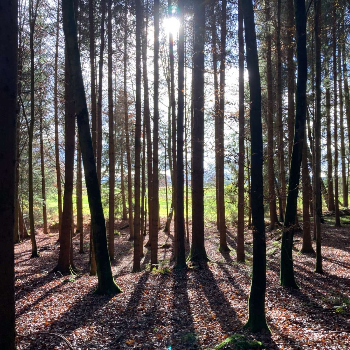 Waldbaden Shinrin Yoku Erleichterung bei Trauer