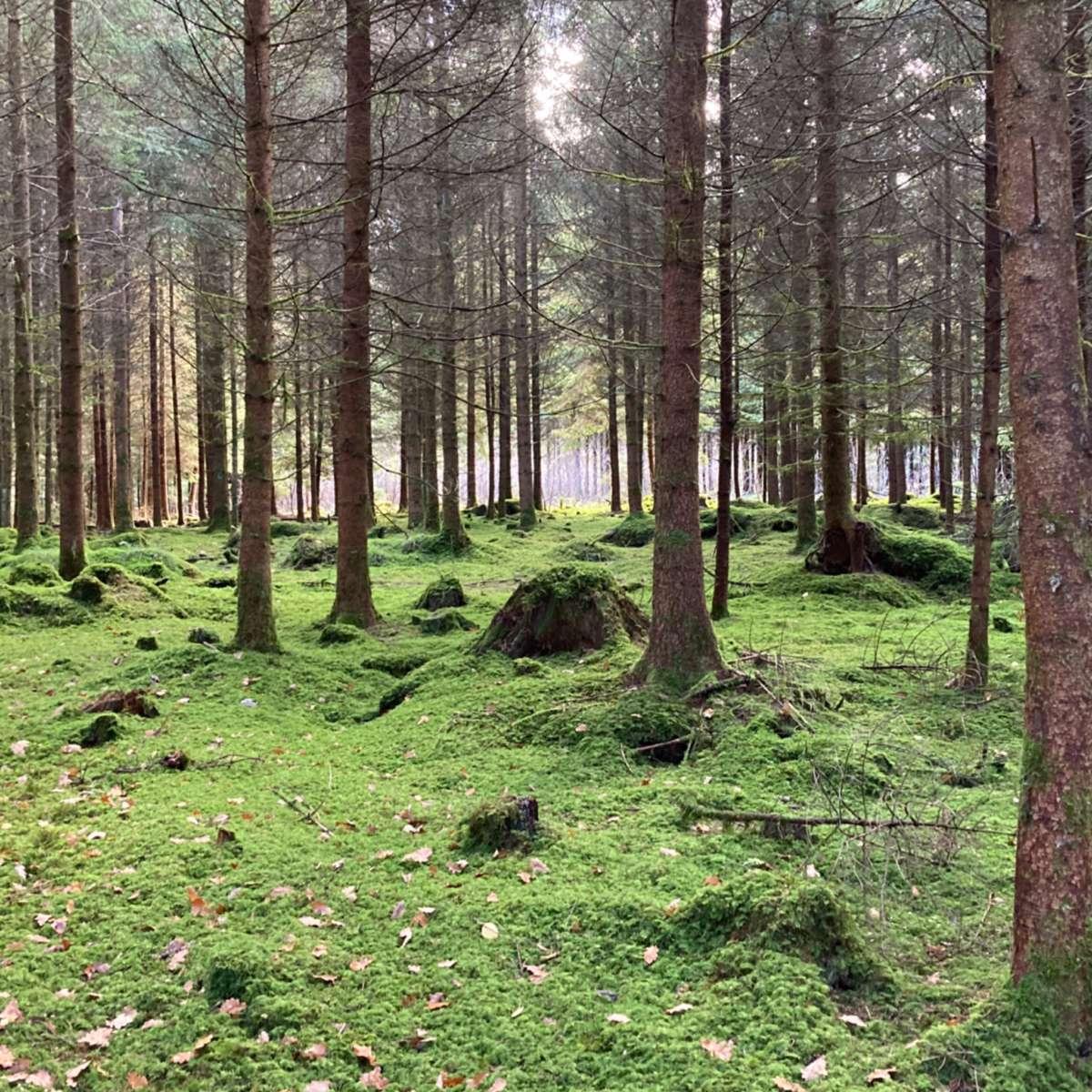 Waldbaden Shinrin Yoku Natur und Trauer